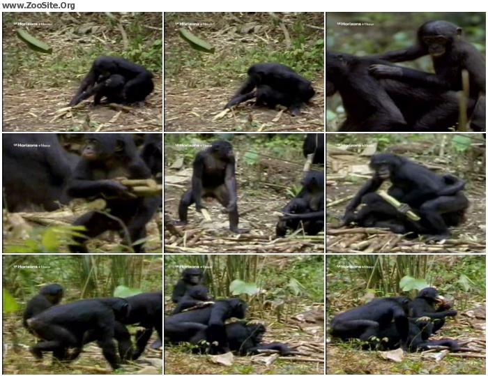 a8a4a5951498634 - Monkey Sex - ZooSex Tube Amateur