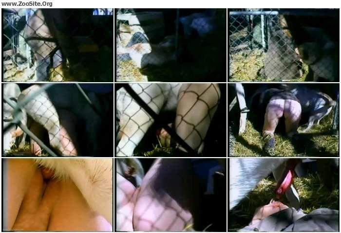 7bfad7880280354 - Pleasure In The Pen - Bestiality Amateur Video