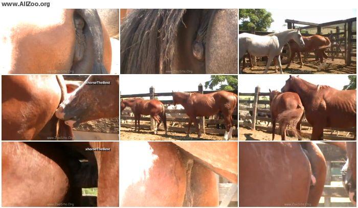 7922dc886158704 - New Mare 1 - Animal Porn 1080p/720p