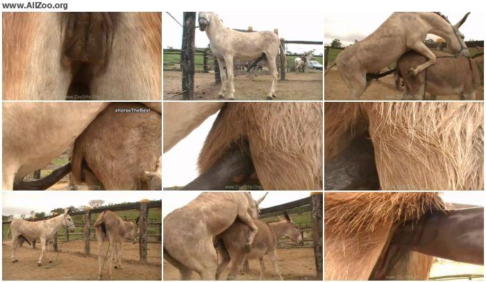 6dbe9e886158314 - Donkey Massive Hot 02 - Animal Porn 1080p/720p