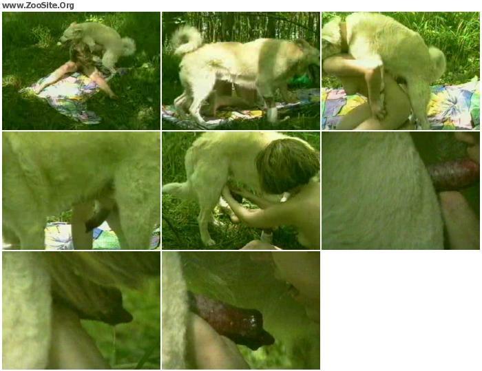 678198868176014 - Dog Sex In The Forrest - ZooSex Tube Amateur