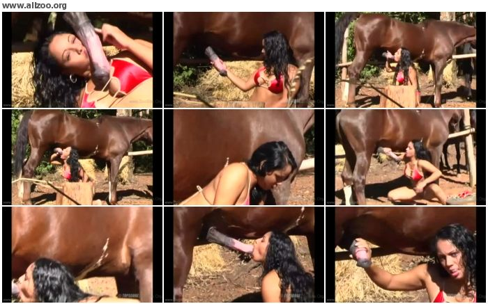 24469c736870463 - Stallion Sex our Hot life - Videos Bestiality Horse