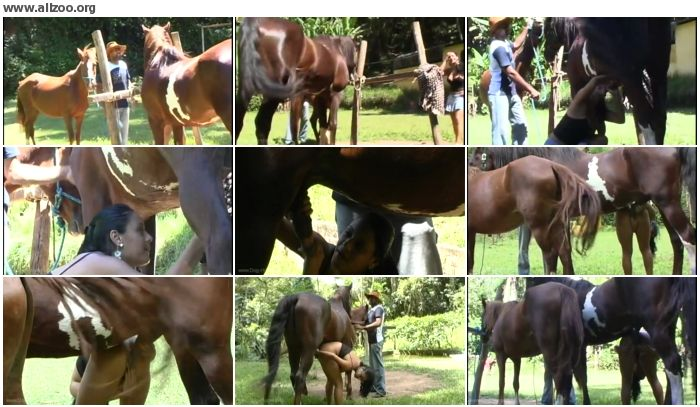 19a169672673543 - Zoosection-017 - Videos Bestiality Horse