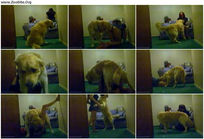 6d85e2971459744 - Dog Sex In Hotel Bedroom - Bestiality Amateur Video