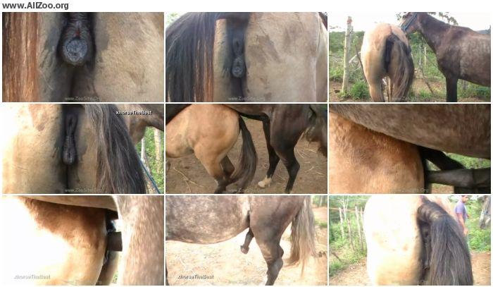 885356978361034 - Madonna Vs Stallion Scene 01 - Animal Porn 1080p/720p