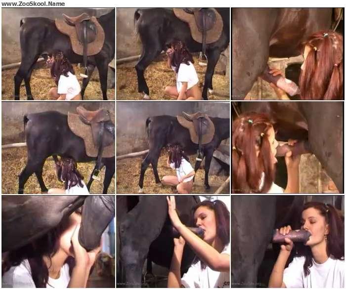 b8eba51066035764 - Horse Blow - Zoo Tube Video