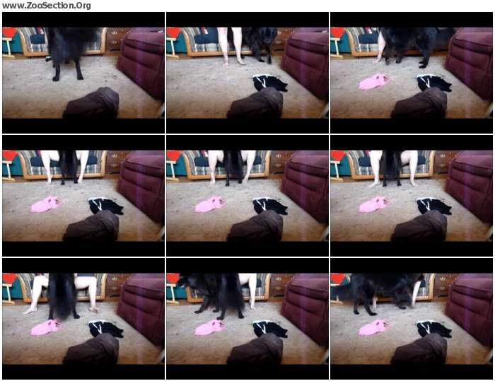 c428371066014084 - Amateur Dog Show 6 / Stickam ZooSex