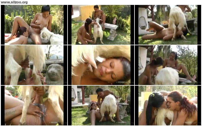 b54840736870123 - Zoo Stallion Porn - Videos Bestiality Horse