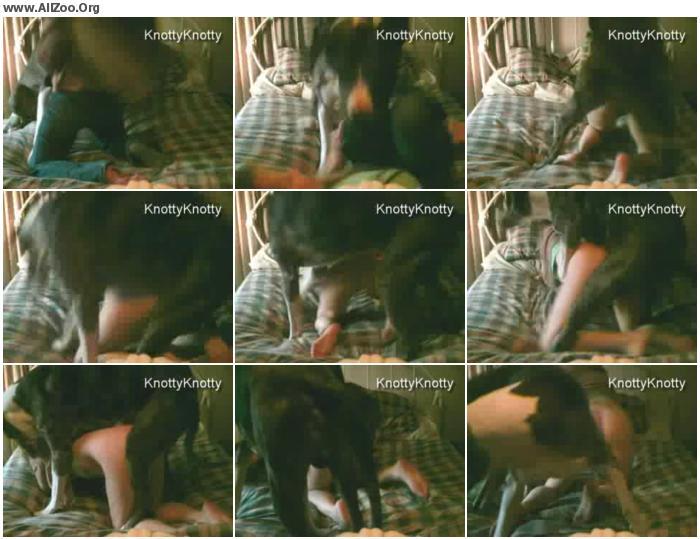 1a66e8951515774 - Knottystie Dog Sex - HomeMade Private ZooSex Video