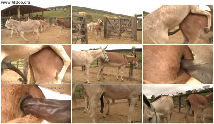 885eee978360334 - Donkeys Denas Farm 01 - Animal Porn 1080p/720p