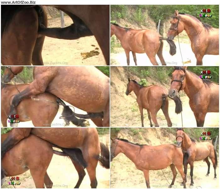 c6ed0a1267358004 - Huge Stallion Vs Hot Mare Sc 04 - HD Zoo Porn 720p/1080p