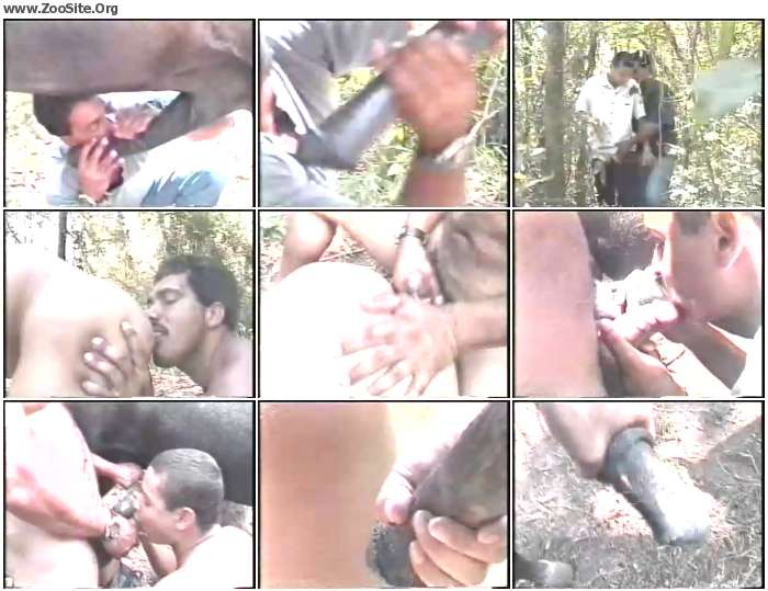 d2c36f1197610624 - Gay Zoo Au Brasil - Bestiality Amateur Video