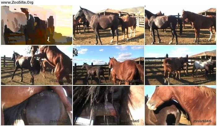246893978351494 - Dinho Stallion [Animal Porn HD-720p]
