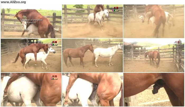 81d5fe886159064 - The Best Of The Best Scene 02 - Animal Porn 1080p/720p