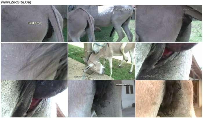 ca6e37978349474 - Donkey Female Virgin First Time [Animal Porn HD-720p]
