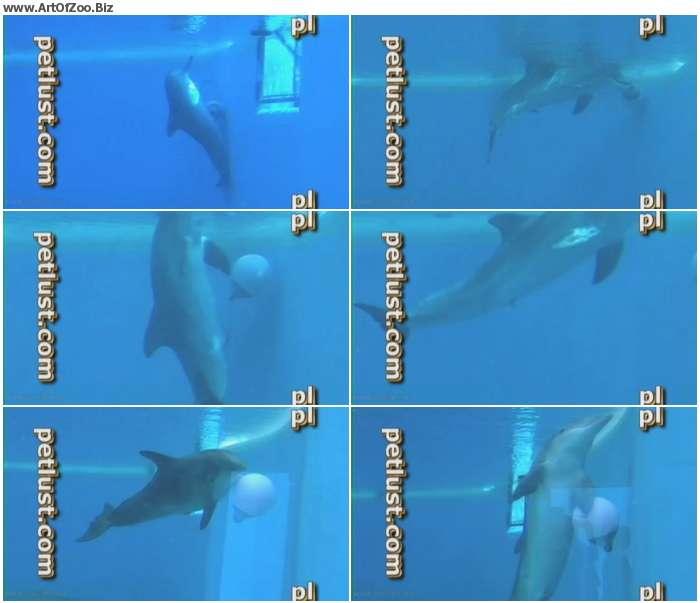 ed04871074229254 - Petlust - Dolphin Masturbation