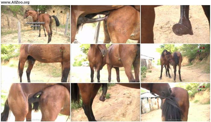 c41bb7886158104 - Huge Stallion Vs Hot Mare Sc 03 - Animal Porn 1080p/720p