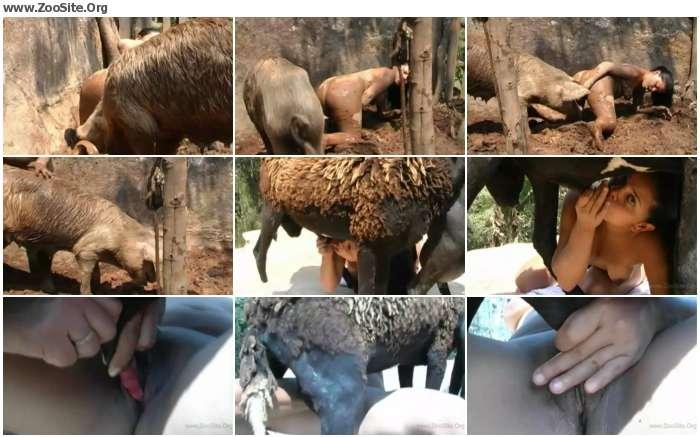 37c86b736858253 - Stallion Porn Bestiality - Horse Porn Videos