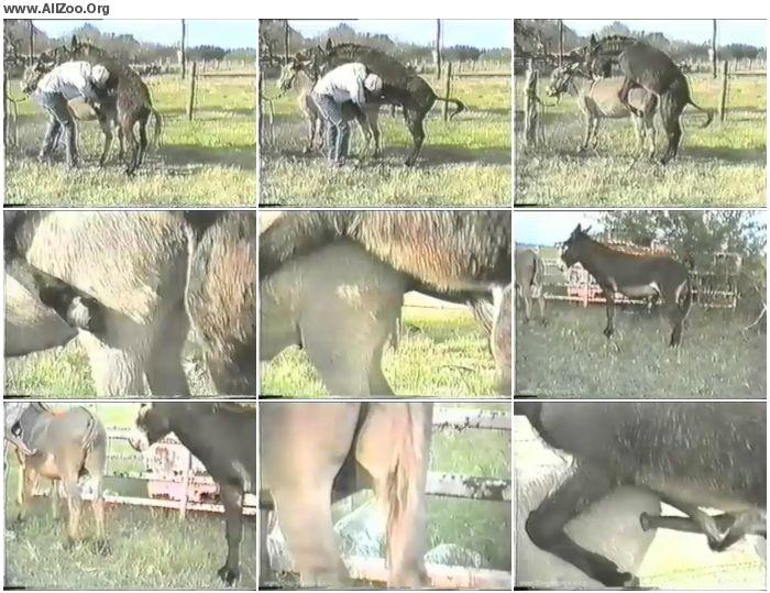 92dcfd900723094 - Retro Bestiality - Donkey Porn - Vintage Animals
