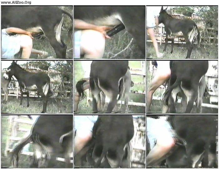 12a547900723054 - Retro Bestiality - Donkey Sex - Vintage Animals