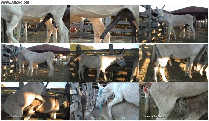 8b025f886157624 - Masturbation Donkey Jack - Animal Porn 1080p/720p
