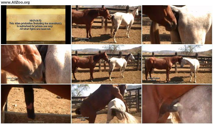 56e151886159224 - Stallion Vs Mare Sc 2 - Animal Porn 1080p/720p