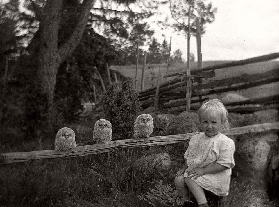 Little girl and three owls, Sweden, 1925