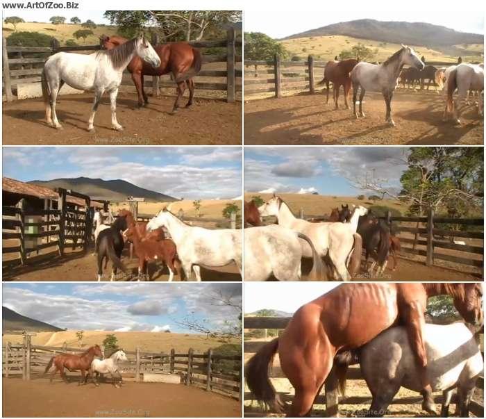 1ab93a1267358194 - Stallion Vs Mare Hot Scene 01 - HD Zoo Porn 720p/1080p