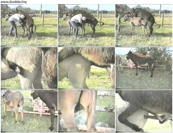 dc1381900718744 - Donkey Porn - Retro Animal Sex