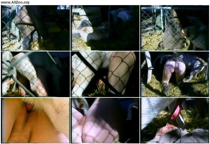 dfc619880286964 - Pleasure In The Pen - Amateur ZooSex