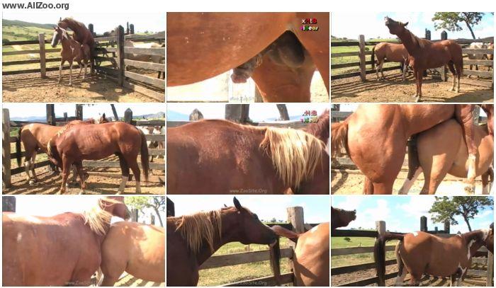 d62597886158514 - The Best Of The Best Scene 03 - Animal Porn 1080p/720p