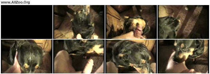 5f51a21133103514 - Male AnimalSex - Shatzee Facial - Zoo Gay ZooPhilia