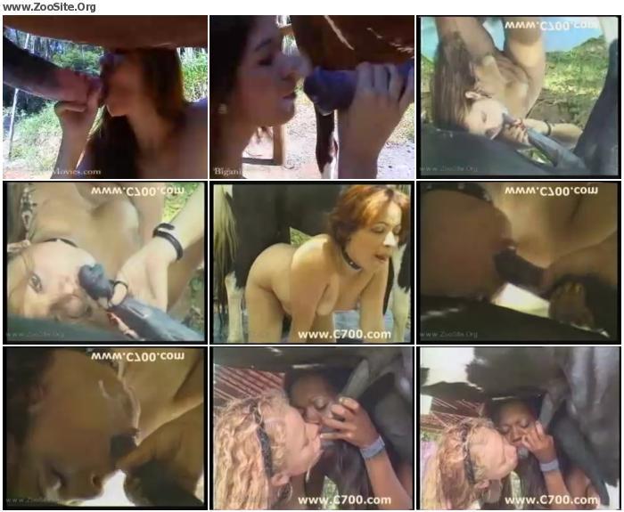 a88cd6737047793 - Horse Cum  - ZooSex Tube Amateur