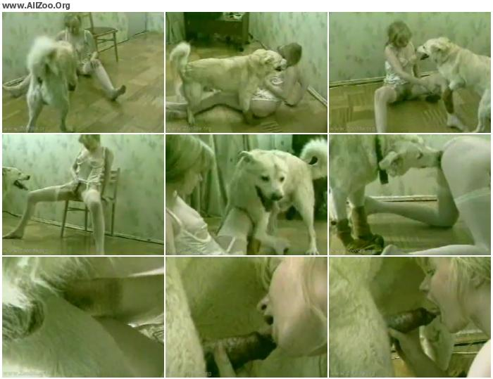 58df14673216913 - Dog Humping A Girl When She S On The Phone - Small Mobile Bestiality Video
