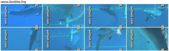 740859681830703 - Petlust - Dolphin Masturbation - Men and Animals