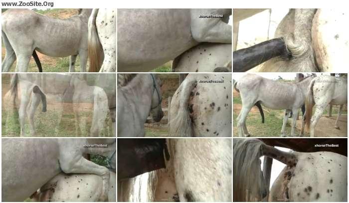 739f1c978349204 - Jack Vs Mare Primavera [Animal Porn HD-720p]