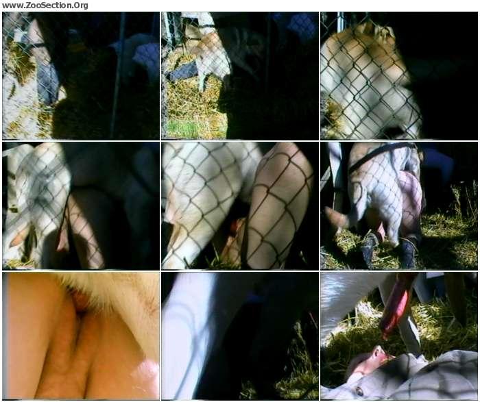 3b33231012903564 - Barn Fun / PetSex SiteRip