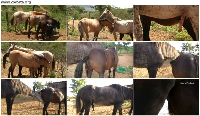 9fcc8d886151194 - Small Mares  Pink And Madona [Animal Porn HD-720p]