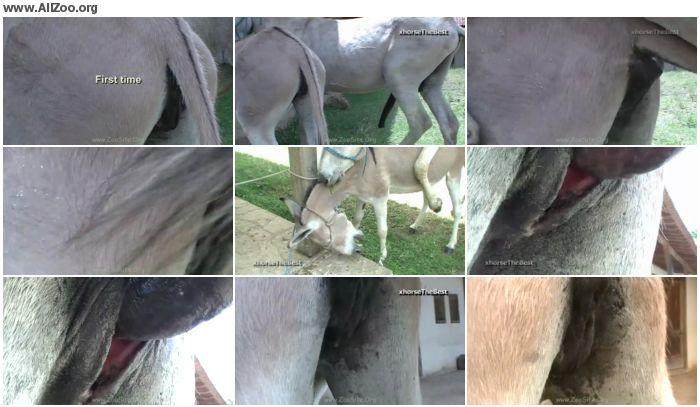fdf697978359784 - Donkey Female Virgin First Time - Animal Porn 1080p/720p
