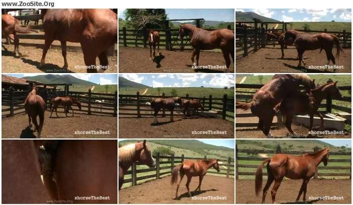 a99f97978350564 - 2th Coverage [Animal Porn HD-720p]