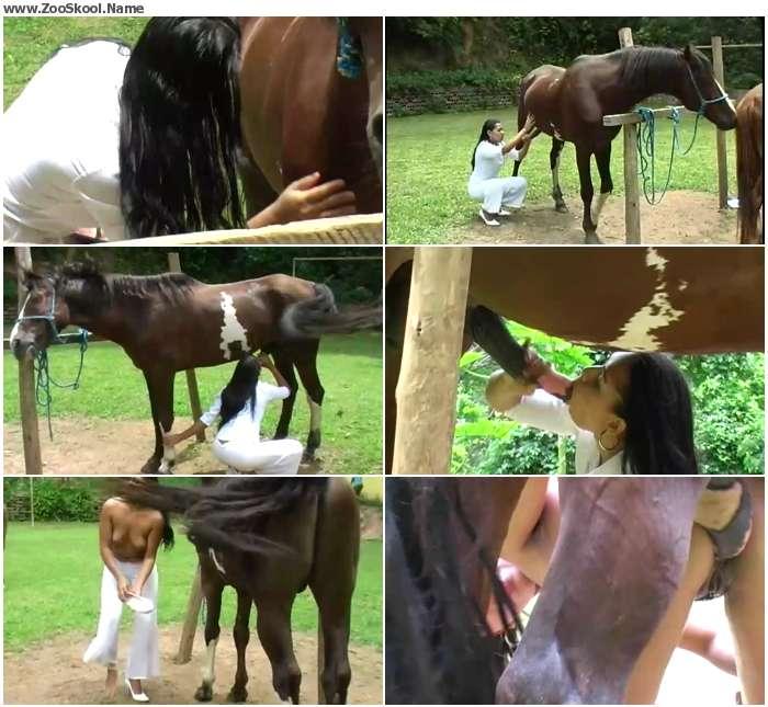 9171f21121347374 - Horse proctologue / Horse Porn