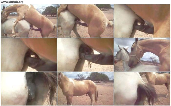 9d1bff880266644 - Cavalo Copulando Ii - Copulating Horse - Videos Bestiality Horse