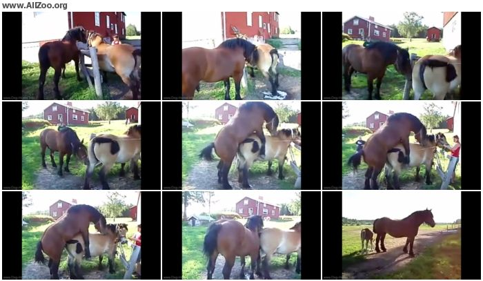 2a0560673195793 - Bestiality Amateur - Hstbetckning I Knpa  Horse Breeding