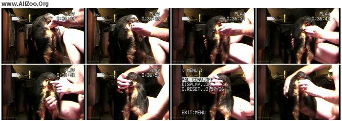 4750a11252776464 - Male AnimalSex - Shatz Ass Dildo - Zoo Gay ZooPhilia