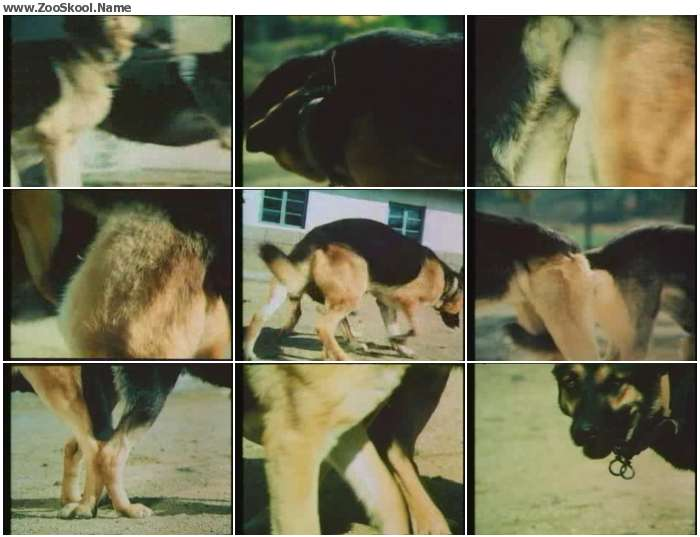c76bf61235127974 - Doggie Mating - Zoo Tube Video
