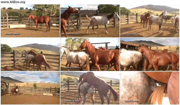 38eb93886158374 - Stallion Vs Mare Hot Scene 01 - Animal Porn 1080p/720p