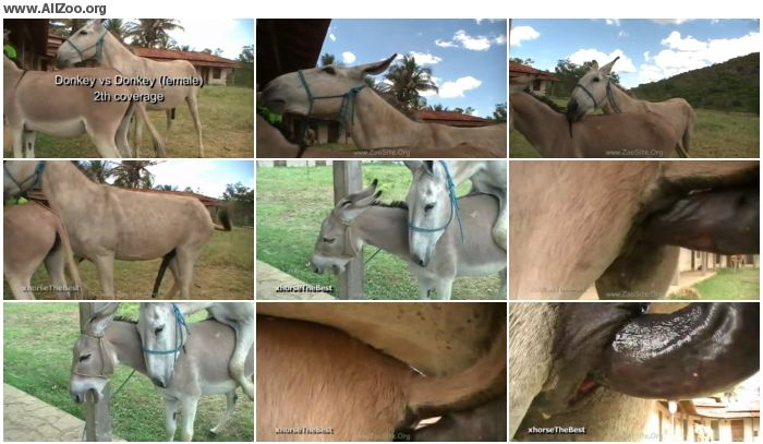 fe0986978361634 - Donkey Mating 2th Coverage - Animal Porn 1080p/720p