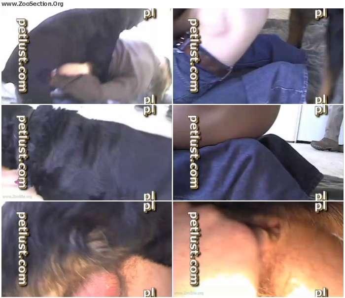 4805241012385704 - Gay ZooSex - Petlust - The Rottie Likes It R / AnimalSex Video