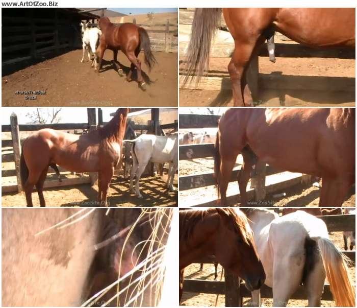 747e741267357964 - Stallion Vs Mare - HD Zoo Porn 720p/1080p
