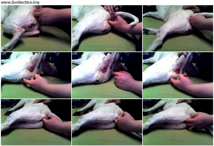 4473a81120770074 - Furrylupus Fingers The Pit / AnimalSex Video